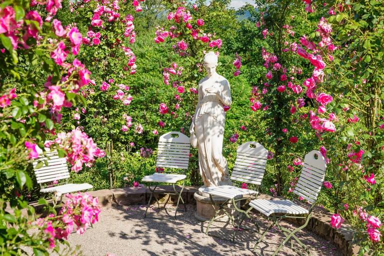 New rose garden on the Beutig, Baden-Baden, Black Forest, Baden-Wurttemberg, Germany