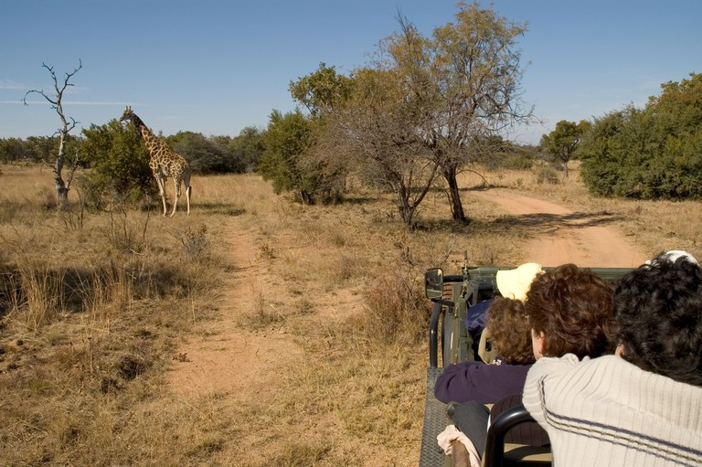 South Africa Limpopo Mabula near Warmbaths game park visitors in game drive vehicle looking at a giraffe