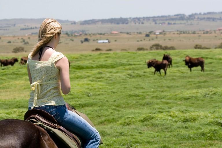 South Africa Horseback Safari at Krugersdorp reservation