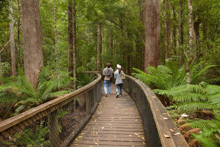 Footpath Through Forest to Newdegate Cave, Hastings Caves State Reserve, Southern Tasmania, Australia BKDJC8