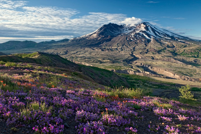 Morning light streams across the wildflowers on Johnston Ridge overlooking Washington?s Mount St Helens Nat Volcanic Monument.