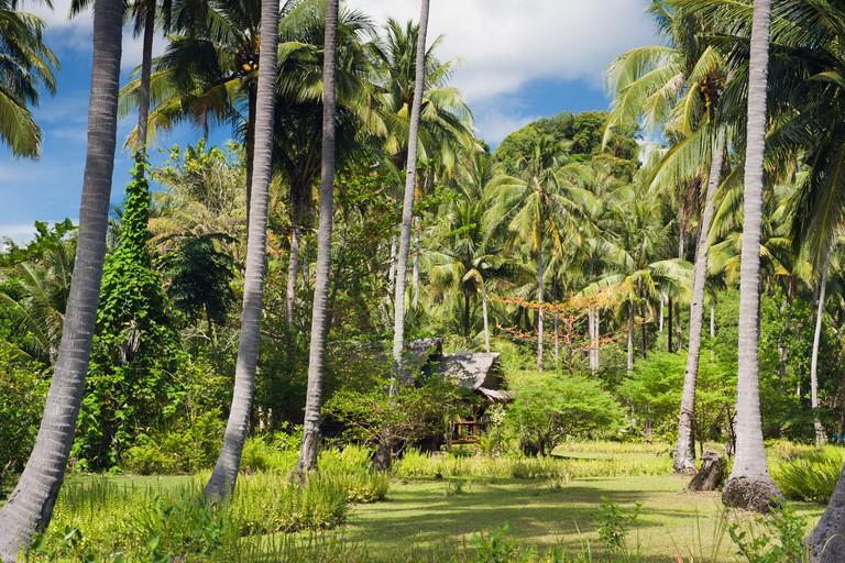 Palm grove, bBungalow in the garden of Lom Lae Resort, Koh Yao Noi island, Phang Nga, Thailand, Southeast Asia, Asia