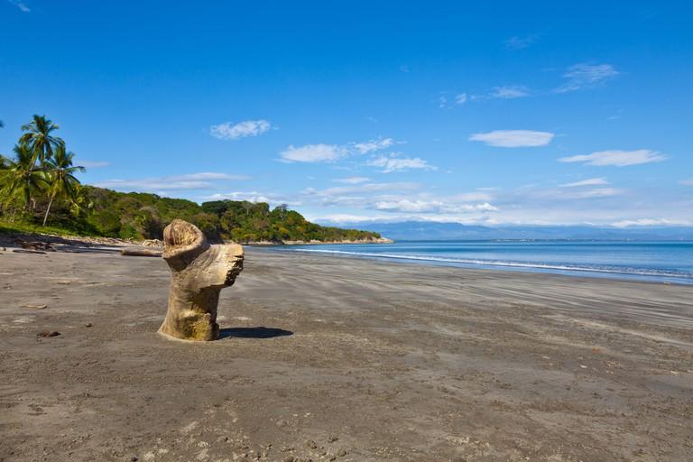 a tree stump driftwood stands on the beach Playa el Coco on Isla San Lucas, costa Rica
