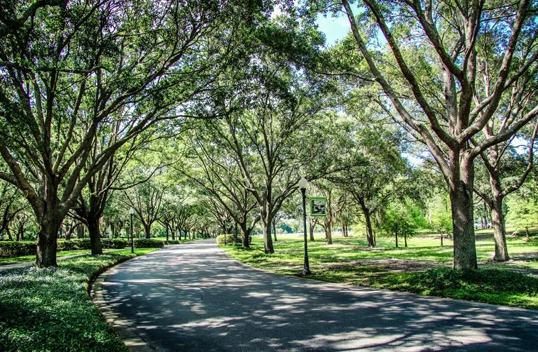 Cypress Grove Park in Orlando Florida_MNDF8A