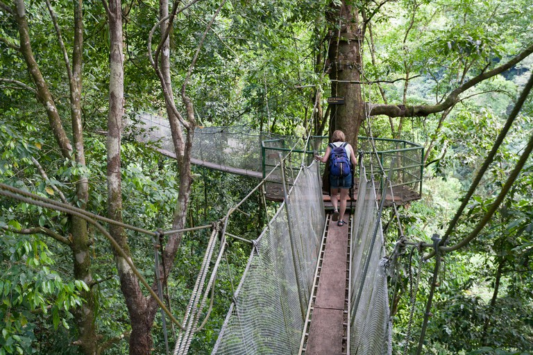 A woman walks along one of the suspended walkways in the forest canopy at the Rainmaker Conservation Project Costa Rica- DMBFG7