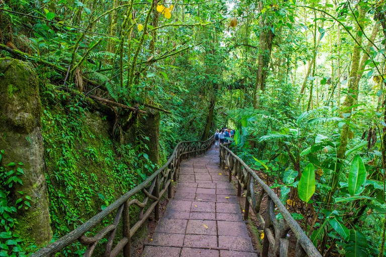 Tropical rainforest in Costa Rica at La Paz Waterfall Gardens