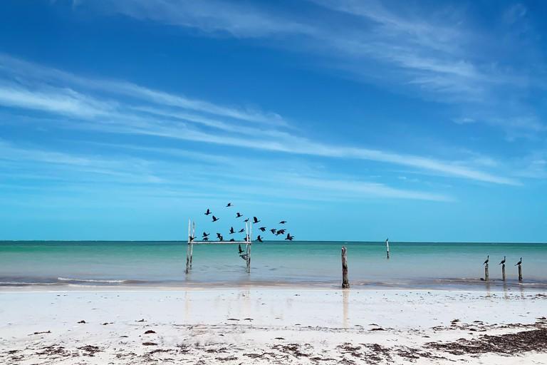 Birds on a beautiful beach in Holbox island in Yucatan peninsula, Mexico