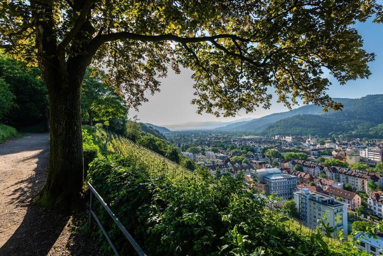 Panoramic view over Freiburg im Breisgau vom Schlossberg