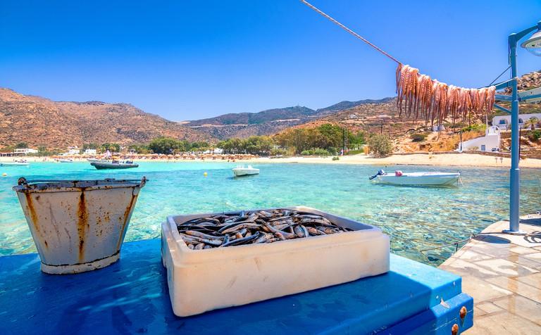 Traditional greek sea food, octopus, drying in the sun, Milopotas, Ios island, Cyclades, Greece
