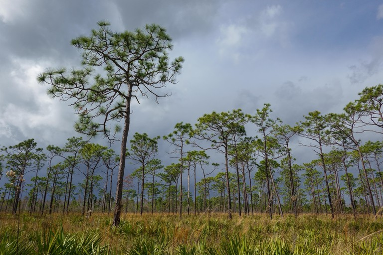 The view from the Pine Island East Loop trail in the Shingle Creek management area near Orlando, Florida, as a sudden storm rolls in.
