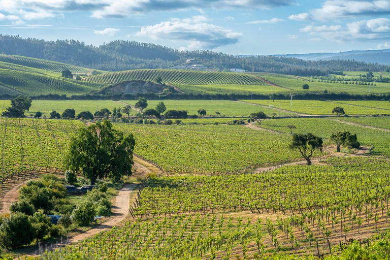 Wines from Chile are maybe the best on the world, we can see the vineyards at Casablanca, Valparaiso, thousands and thousands of growing grapes