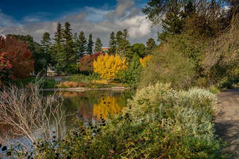 Colorful UC Davis arboretum in the Fall overseing a lake on a partly cloudy day