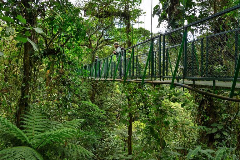 Tourist on Hanging bridge walk at Monteverde cloud forest,Costa Rica,Central America