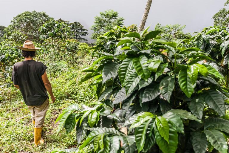 "Juan Carlos Vergara, owner of the one-man organic coffee plantation ""Mile High Coffee"" in the Sierra Nevada de Santa Marta, Colo"