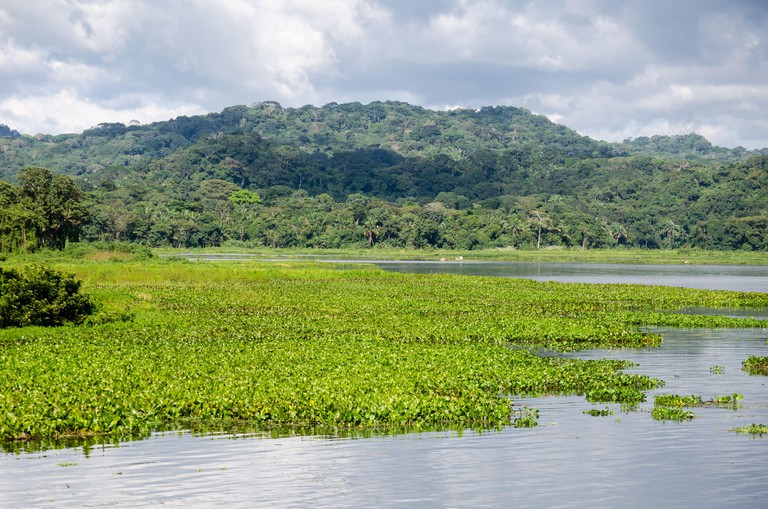 The Chagres River and the Soberania National Park in the distance