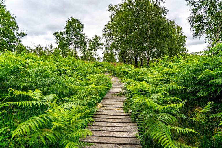Wood planks path in the Struffelt Nature Reserve, near Roetgen-Rott, part of the Eifelsteig hiking trail