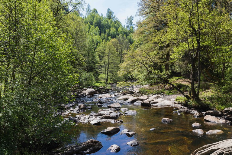 Rur river flowing through High Fens - Eifel Nature Park in spring
