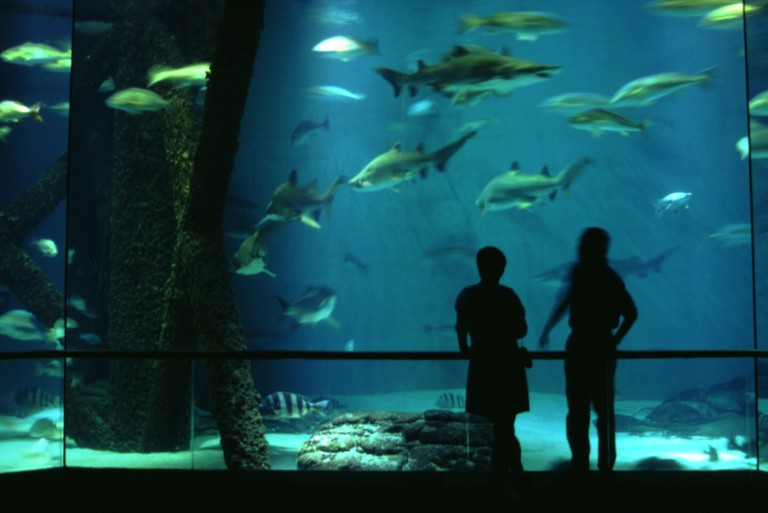 Aquarium tank and visitors