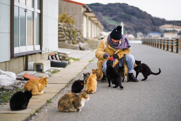 A tourist mingles with stray cats on Ainoshima Island, Japan