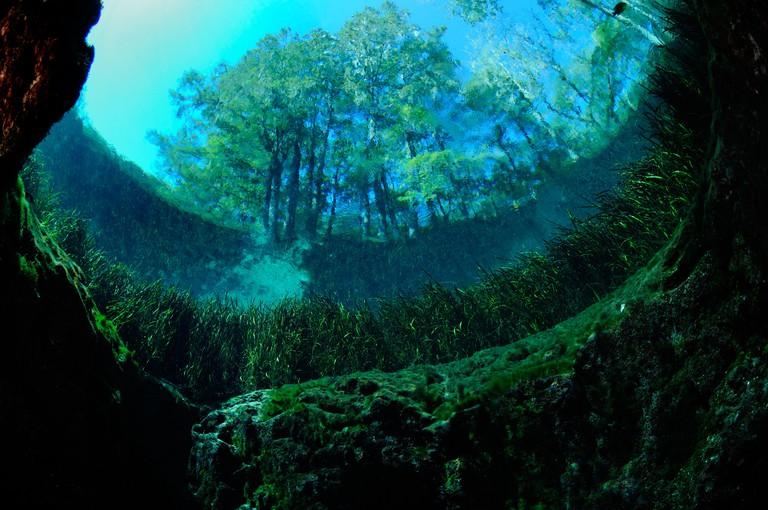 Blue hole, Ichetucknee State Park, Florida