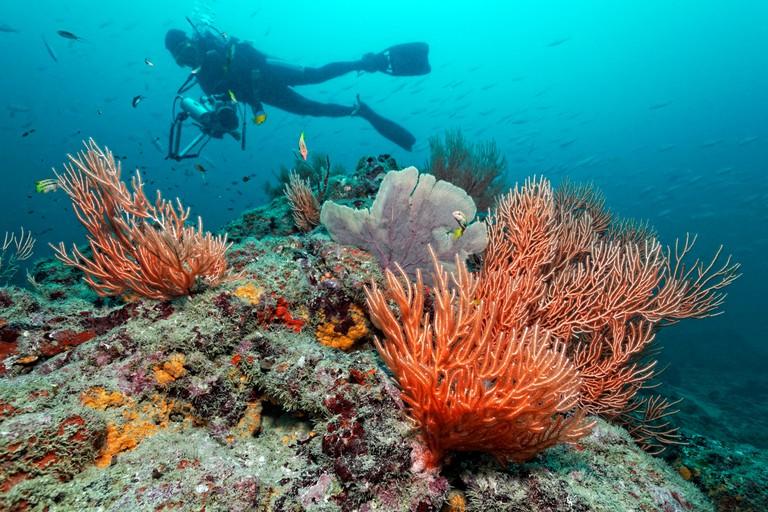 Scuba Diver over Coral Reef, Cano Island, Drake Bay, Costa Rica
