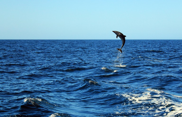 Bottlenose Dolphin Taking a Big Leap. Image shot 03/2014. Exact date unknown.