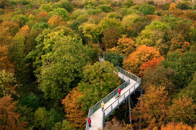 canopy walk way, Germany, Thueringen, Hainich National Park