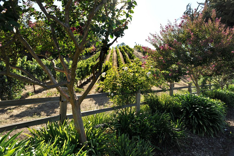 Benziger Family Winery, above San Francisco