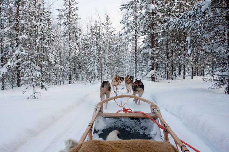 Husky sledding through the forest of Rovaniemi, Lapland, Finland.
