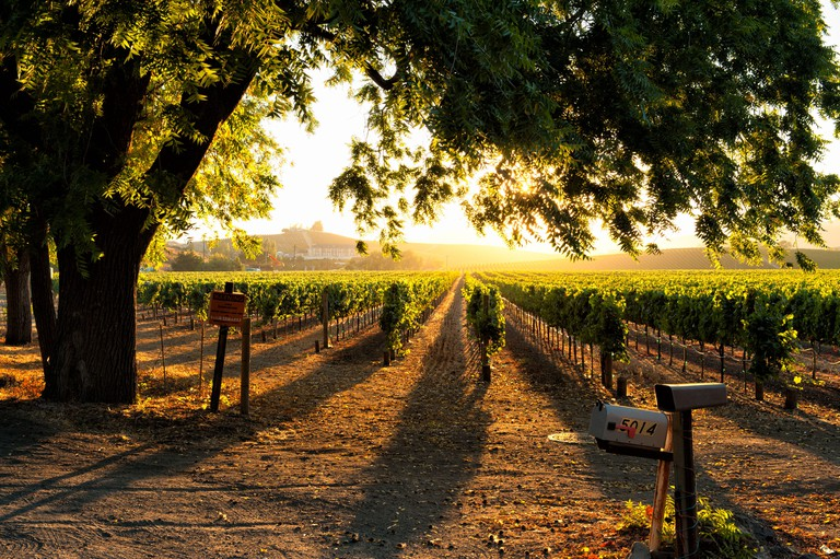Sunset in Sonoma wine country at harvest time