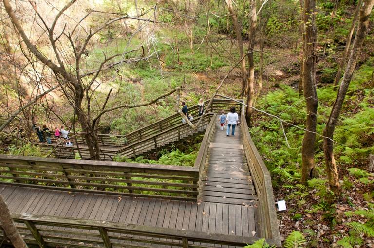 Devil's Millhopper Geological State Park, Gainesville, Florida, United States, USA, North America