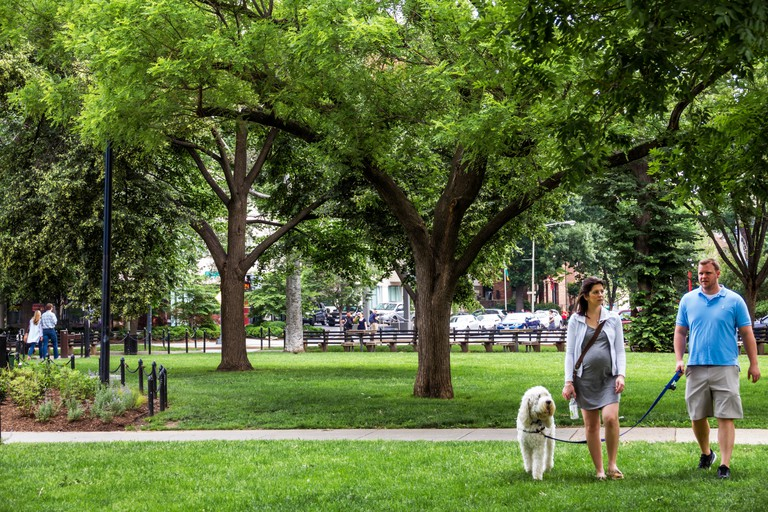 Washington DC, District of Columbia, Dupont Circle, park, adult adults man men male, woman women female lady, dog, pet, walking, leash, trees, sightse