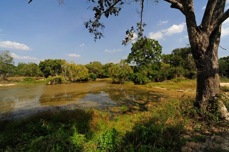 wetlands of Wilpattu National Park, Sri Lanka, Wilpattu National Park
