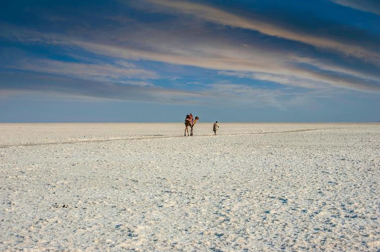 Man walking through Great Rann of Kutch with his camel, Gujarat, India