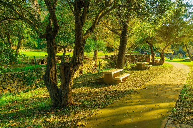 View of a Picnic area with trees, fall foliage, the Kesalon Stream, and visitors, in En Hemed National Park (_2DEYK7N