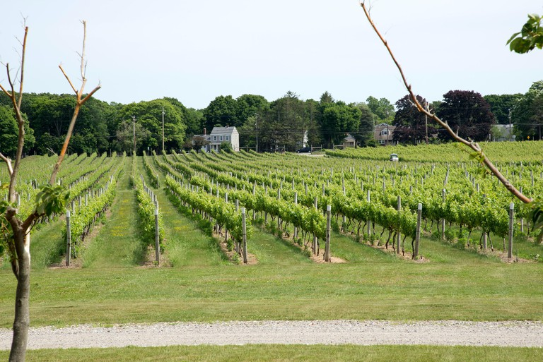 Kontokosta vines and Winery at Greenport Long Island USA. Image shot 06/2015. Exact date unknown.