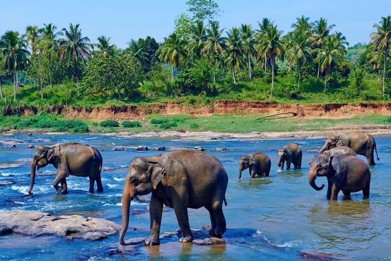 Sri Lanka, Ceylon, North Central Province, Pinnawela elephant orphanage, elephant bath