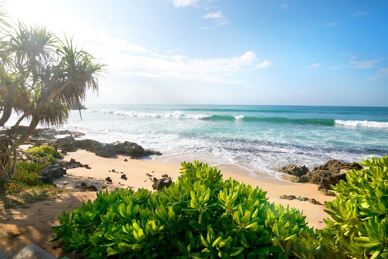 Exotic plants on a sandy beach of indian ocean