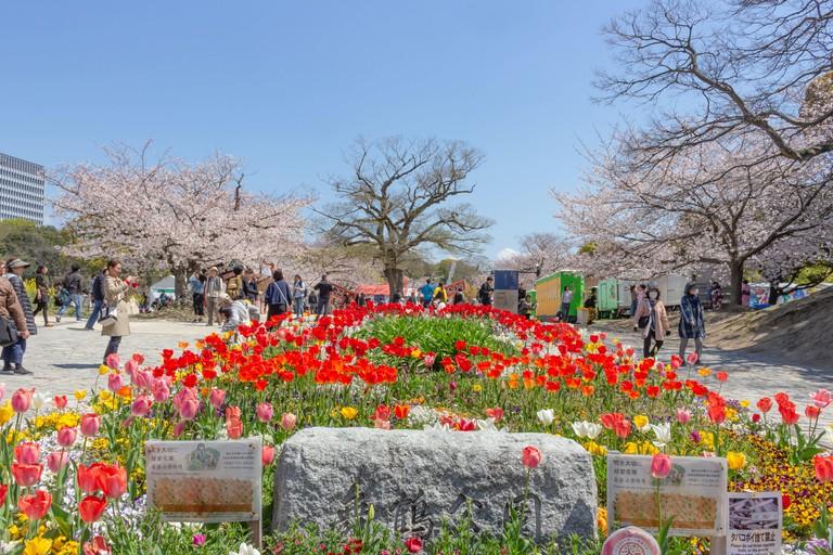 Fukuoka, Japan - April 02 2019 : Colorful Flower Bed in Maizuru park, Fukuoka. There are beautiful cherry blossoms in springtime.