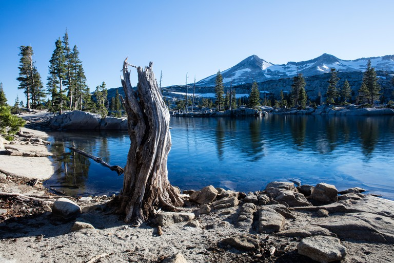 A gnarled tree stump stands on the edge of a mountain lake in the Desolation Wilderness of eastern California.
