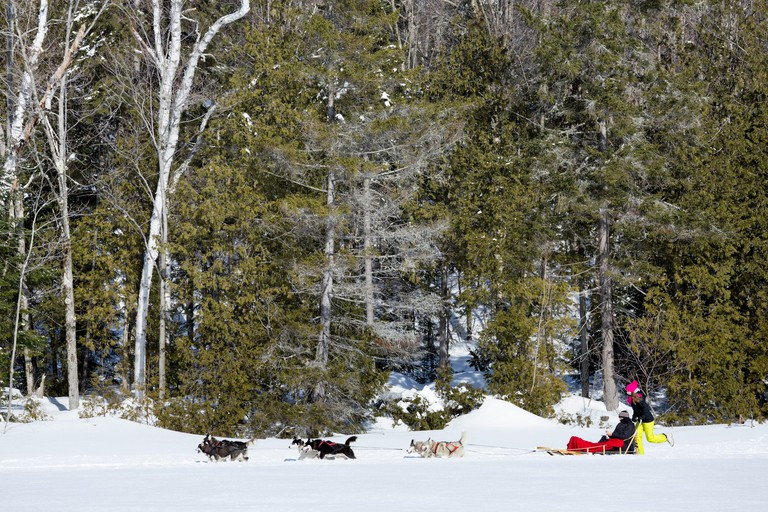 Canada, Quebec province, the Laurentians, Saint Hippolyte, the Auberge du Lac Morency, dog sledding, crossing the frozen lake Morency