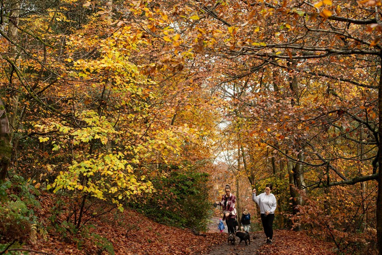 2DA6PPT Walkers surrounded by autumnal colors at Lickey Hills Country Park, Birmingham.