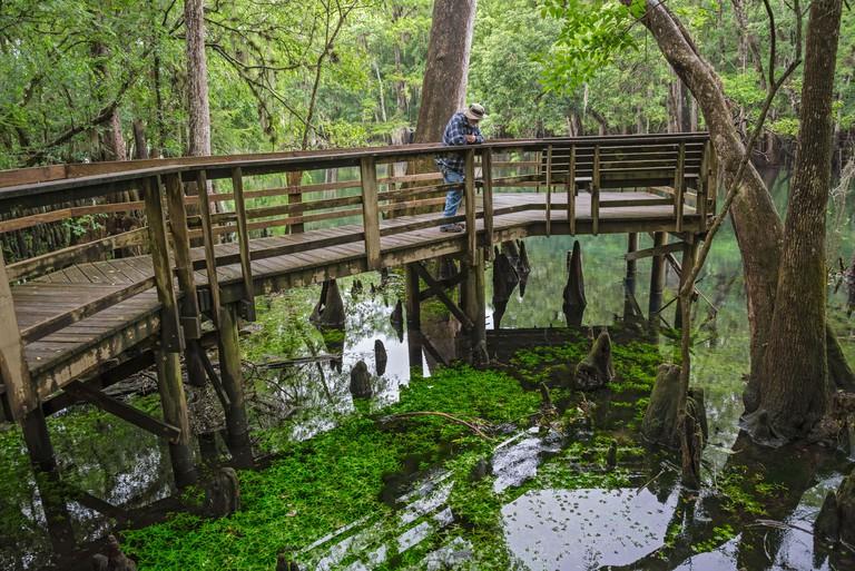 Manatee-Springs-State-Park_D9KXMH