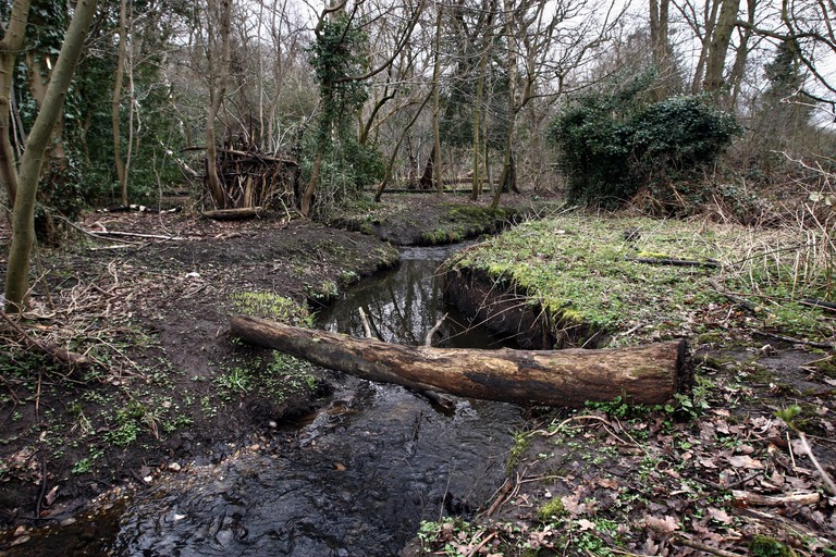 Heritage Lottery Fund for Moseley bog