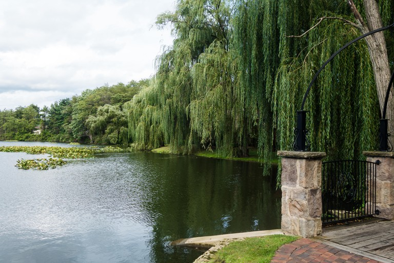 A weeping willow tree bends gracefully over a lake at the The Villas at Gervasi Vineyard in Canton, Ohio, USA