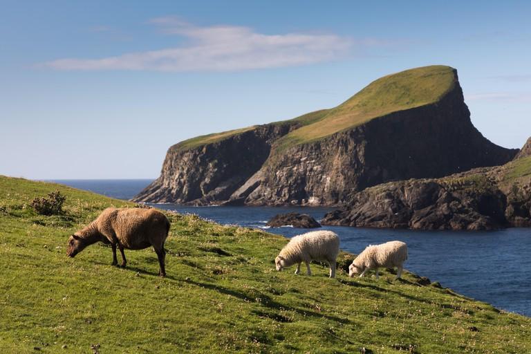 Sheep rock on Fair Isle, Shetland