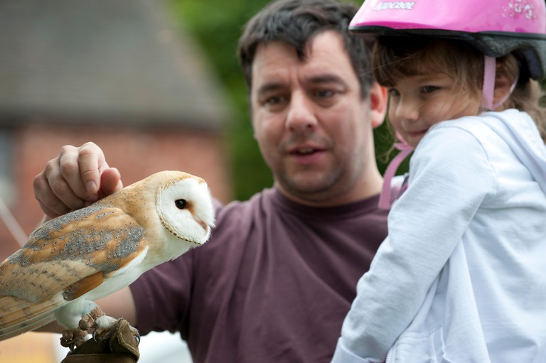 Man and child looking at Barn Owl at the Black Country Living Wildlife Roadshow, Sandwell Park Farm, West Bromwich, West Midlands, August 2011.  Did you know? Although owls have excellent night vision, their primary hunting sense is super-sensitive hearin