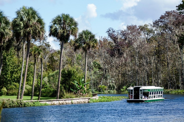 Florida, South, Silver Springs, State Park, Silver River, glass bottom boat, Chief Micanopy, nature, natural scenery, water, palm trees, sightseeing v