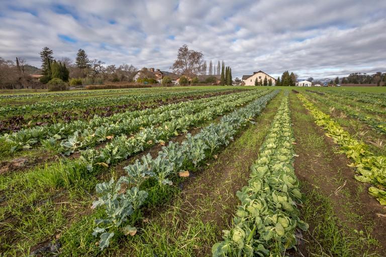 culinary garden, garden, gardening, organic garden, Trefethen Family Vineyards, Napa, Oak Knoll District, Napa Valley, Napa County, California
