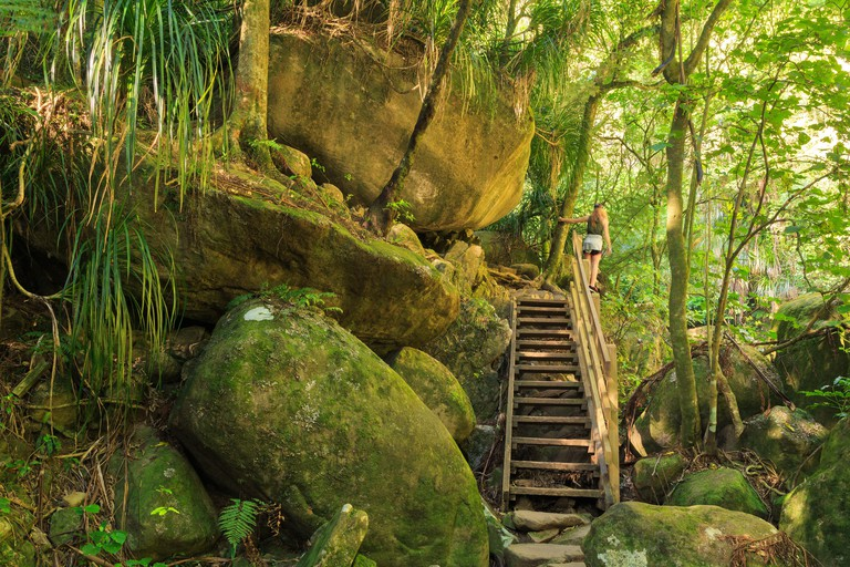 A walking track in the forests of the Kaimai Mountains, New Zealand. A wooden stairway leads up a pile of gigantic mossy rocks